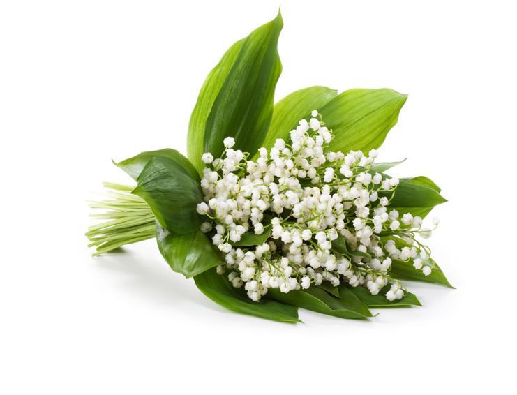 Konvalinka kvetinová vôňa na výrobu mydla