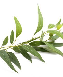 Silica eukalyptus 10ml do mydla a kozmetiky