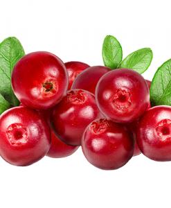 Brusnica ovocná vôňa na výrobu kozmetiky
