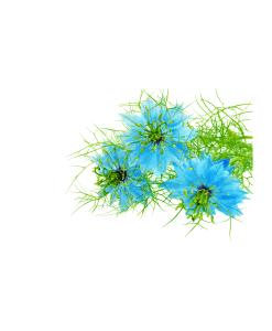Vôňa do mydla a kozmetiky damašková kvet