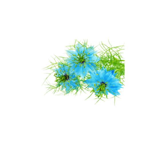 vona do mydla a kozmetiky damaskova kvet