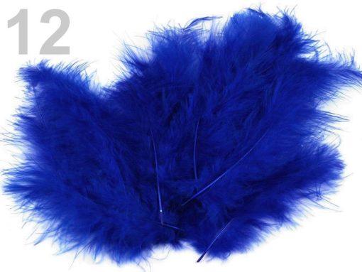 pstrosie pierka modra